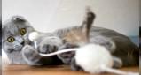 Vorschau: Katzenpension Unbehaun