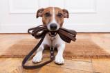 Vorschau: Hundeschule Salmtal