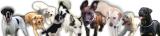 Logo: Hundezentrum Hundeprofi-Köln