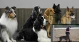 Vorschau: Hundezentrum Hundeprofi-Köln