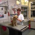 Vorschau: Dr. Dralle - Ihr Tierarzt in Steglitz