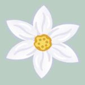 Logo BlütenStern